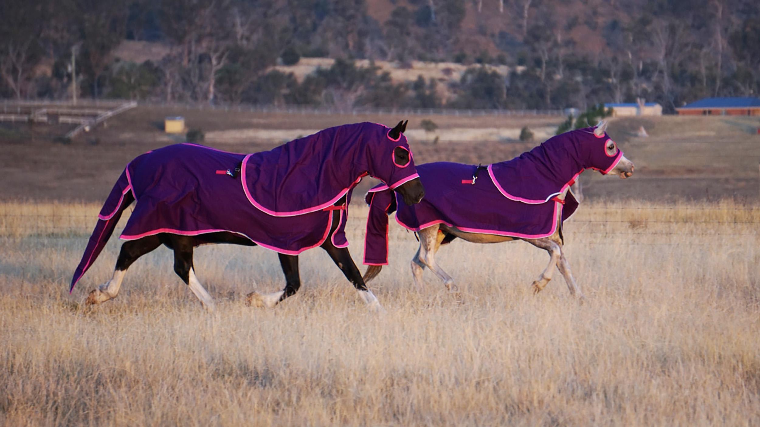 Kersey Wool Horse Rug Sign Ur Neigh M